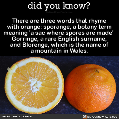 Words that rhyme with orange